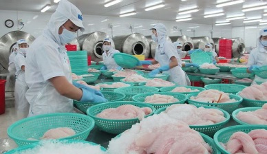 Promising forecast for Vietnamese pangasius